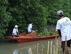 Selain Kelola Listrik, PLN Turut Menjaga Kelestarian Ekosistem Hutan Mangrove